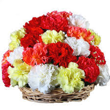12 carnations arrangement
