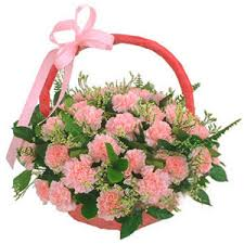 20 pink carnations arrangement